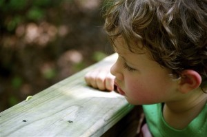D watching an inch worm in the mountains